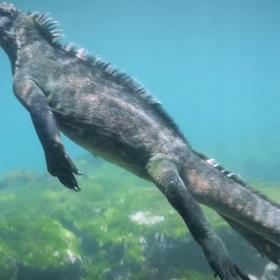 Scuba dive and see marine iguanas - Bucket List Ideas