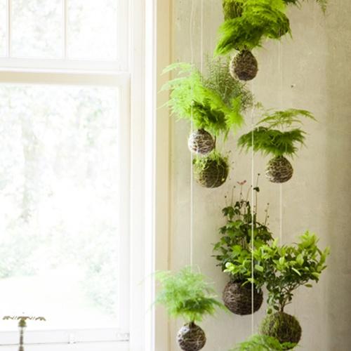 Make a hanging garden - Bucket List Ideas