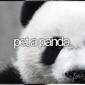 Pet a Panda - Bucket List Ideas