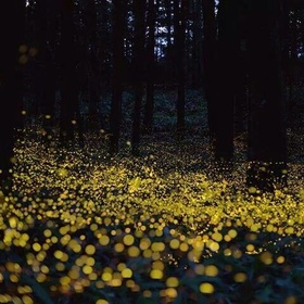 See the Fireflies of Great Smoky Mountain - Bucket List Ideas