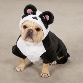 Own a French Bulldog - Bucket List Ideas