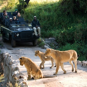 Visit Kruger National Park - Bucket List Ideas