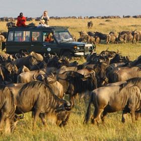 Follow wildebeest Migration at Masi Mara - Bucket List Ideas