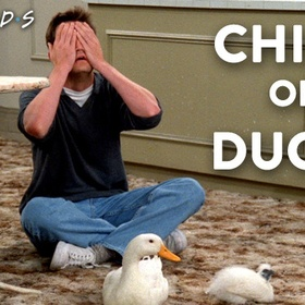 Buy a chick and/or a duck - Bucket List Ideas