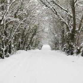SEE SNOWFALL - Bucket List Ideas
