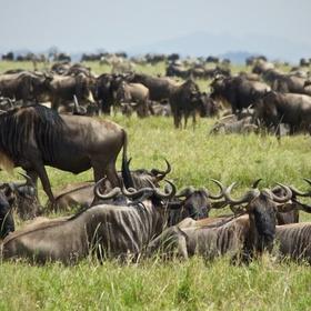 See the wildebeest migration at the Masi Mara - Bucket List Ideas