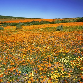 Visit the World's Richest Floral Kingdom in South Africa - Bucket List Ideas