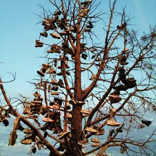 Put a pair of my shoes on a Shoe Tree - Bucket List Ideas