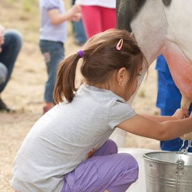 Milk a Cow - Bucket List Ideas