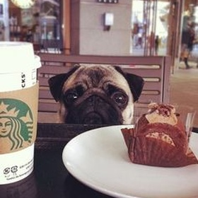 Visit a Pug Cafe - Bucket List Ideas