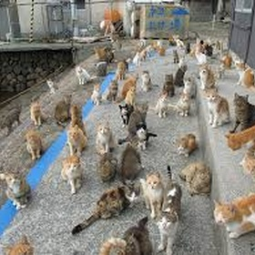Visit cat island - Bucket List Ideas
