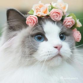 Nuôi mèo - Bucket List Ideas