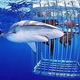 Go Cage Diving with Sharks - Bucket List Ideas