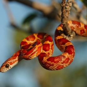 Have a pet snake - Bucket List Ideas