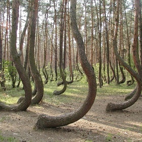 See the Crooked Forest ~Poland - Bucket List Ideas