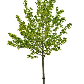 Plant my own tree and watch it grow - Bucket List Ideas