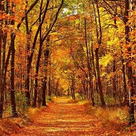 Create an Autumn Themed Photo Album - Bucket List Ideas