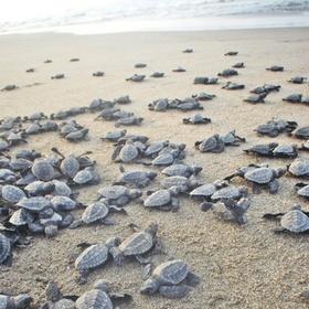 Watch a sea turtle nest hatch - Bucket List Ideas