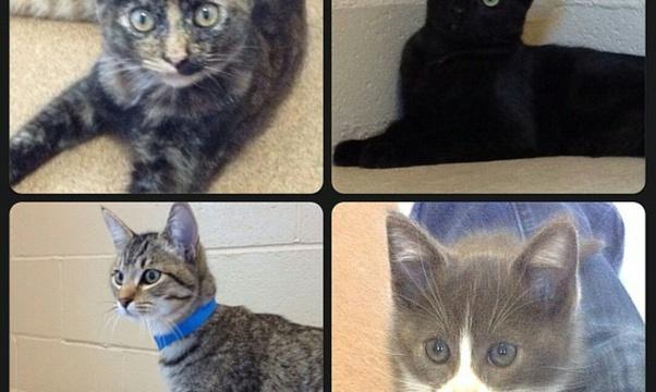 Volunteer at an animal shelter - Bucket List Ideas
