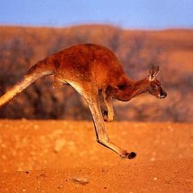 See a kangaroo - Bucket List Ideas