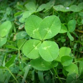 Find a four leaf clover - Bucket List Ideas