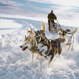 Ride on a Sleigh pulled by Huskies - Bucket List Ideas