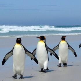 See Wild Penguins on the Beach - Bucket List Ideas