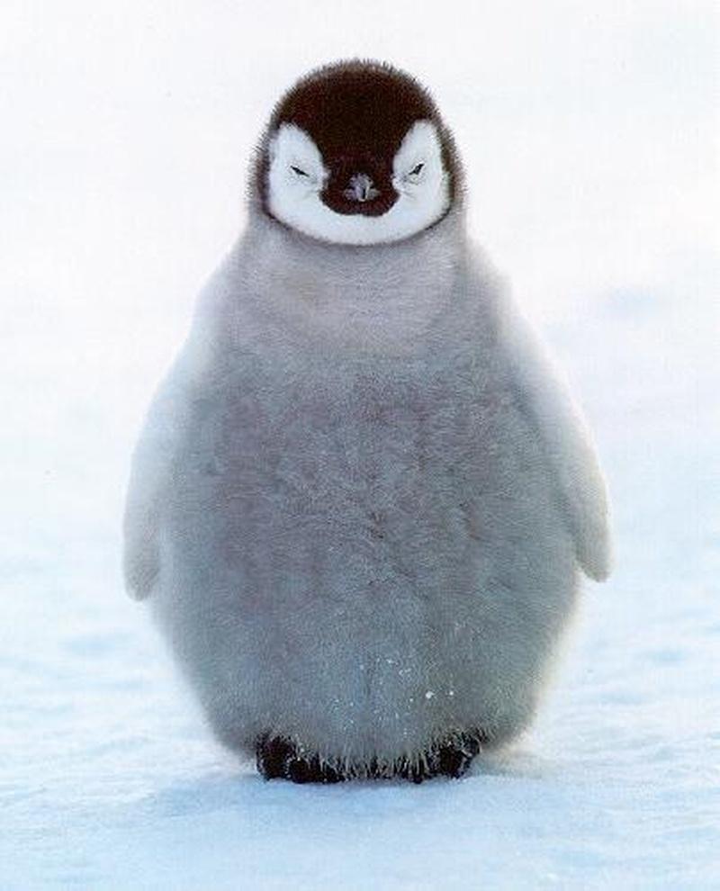 Bucketlist Pet A Penguin Official Bucket List