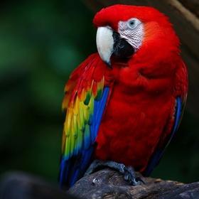 Hold a macaw - Bucket List Ideas