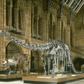 Visit the Natural History Museum in London - Bucket List Ideas