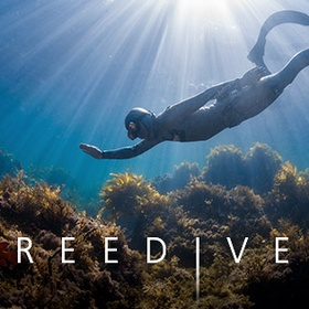 Get a PADI freedive certification - Bucket List Ideas