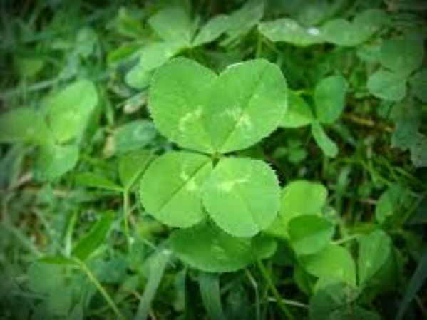 Find a four leaf clover - Bucket List Ideas