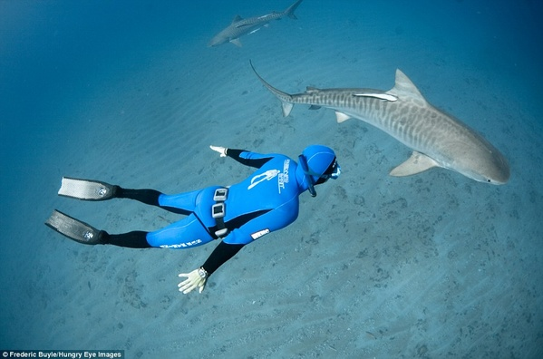 Swim with sharks - Bucket List Ideas