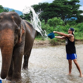 Bathe an elephant - Bucket List Ideas