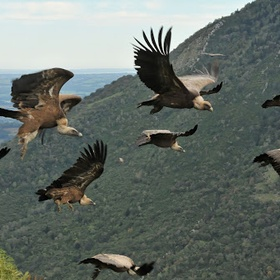 Watch Vultures in the Pyrenees, Spain - Bucket List Ideas