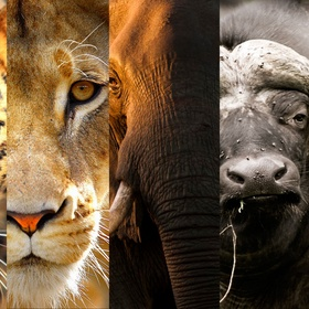 See the big 5 | Africa - Bucket List Ideas