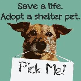 Adopt a dog from a shelter - Bucket List Ideas