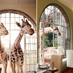Visit the Giraffe Manor in Nairobi, Kenya - Bucket List Ideas