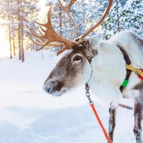 Go on a Reindeer Sleigh Ride, Rovaneimi - Bucket List Ideas