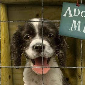 Adopt a pet from an animal shelter - Bucket List Ideas