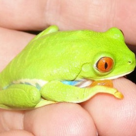Keep the tree frog in my hand - Bucket List Ideas