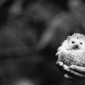 Rescue an hedgedog - Bucket List Ideas