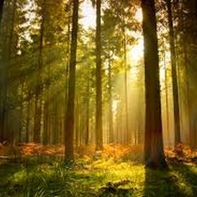 Go on an early morning forest walk🌳🌲 - Bucket List Ideas