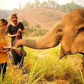 Volenteer work with animals abroad - Bucket List Ideas