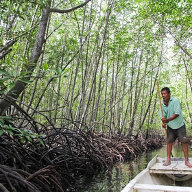 Explore the Mangrove Forest Nusa Lembongan in bali - Bucket List Ideas