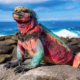 Travel with Galapagos Unbound - Bucket List Ideas