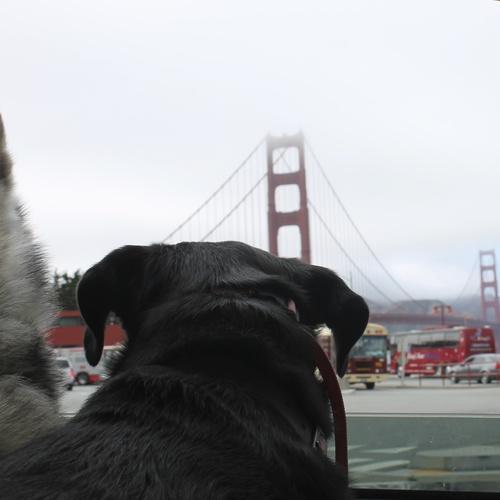 Visit San Fransico - Bucket List Ideas