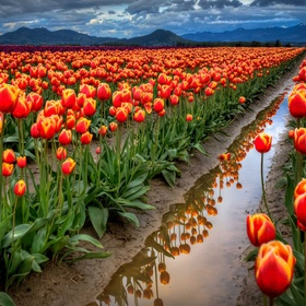 See a tulip field - Bucket List Ideas