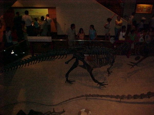 Visit the Smithsonian Institute Museum of Natural History, Washington, D.C - Bucket List Ideas