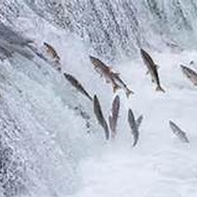 See a salmon run - Bucket List Ideas
